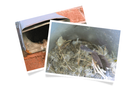 Outdoor damper without a screen / Bird nest inside the exhaust termination